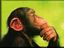 Chimp-Paradox-629x468