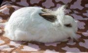 rabbit-1-yr-518ab49a0736c