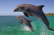 for counselor dolphin frink_roatan_2015_460