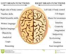 brain-hemisphere-functions-vector-illustration-human-s-34085184