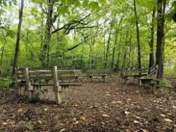 forest clearing images