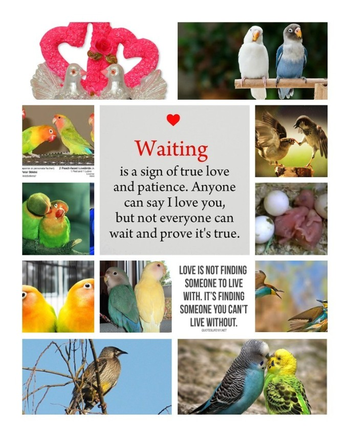 love_birds_collage_take_two_original