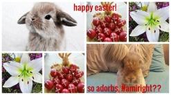adorbs bunnies text 154899756131513216