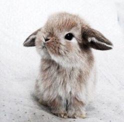 bunny cutest evah 320fe11167c5211e481a1b270fcffdcd--weheartit-cute-bunny