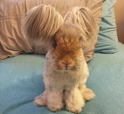 bunny cutest evah NYRi2gq