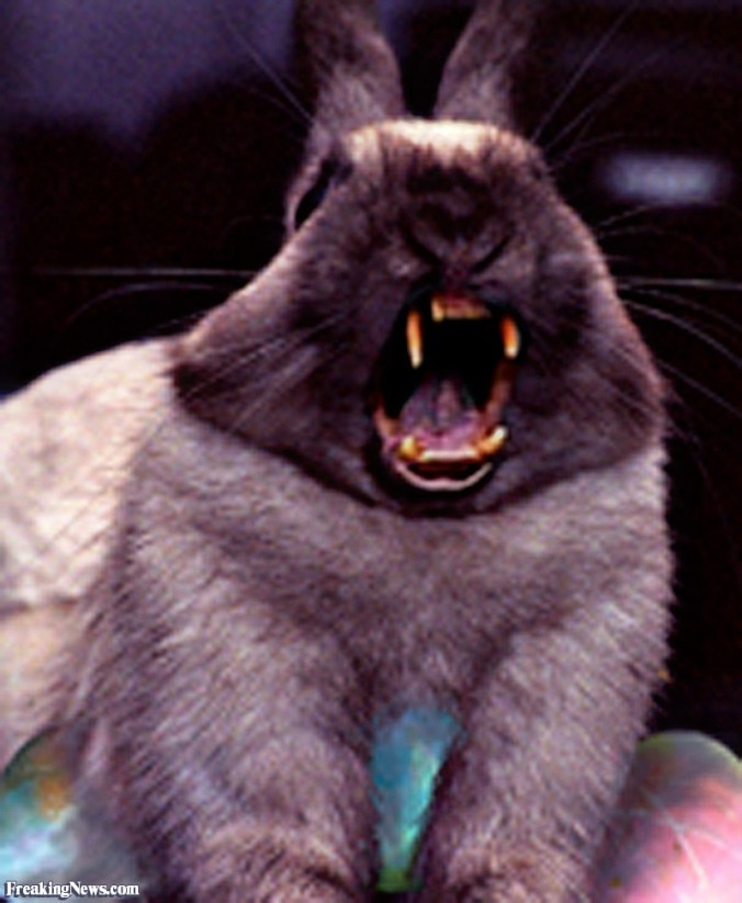 rabbit Scary-Rabbit-with-Teeth--55865